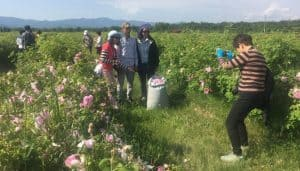 rose fields kazanlak
