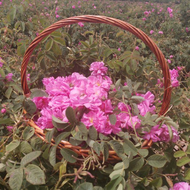 Rose Festival Kazanlak Tour